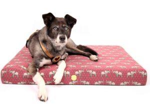 Hundebett Schnauzen-Traum